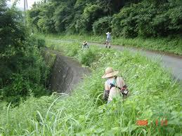 阿久根市 草刈り