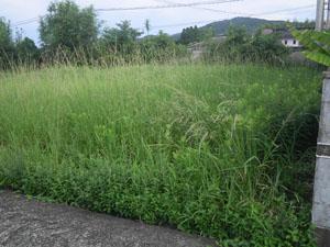 日置市 草刈り前2