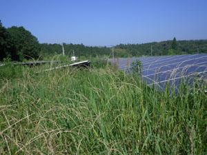 南さつま市 メガソーラー草刈り前
