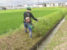 日置市 草刈り