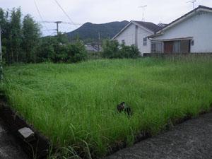 日置市 草刈り前1