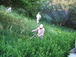 いちき串木野市 草刈り
