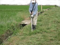 鹿児島市 草刈り