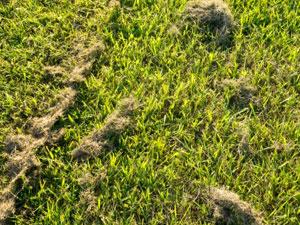 芝刈りに掛かる日数