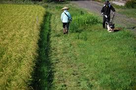 鹿屋市 草刈り
