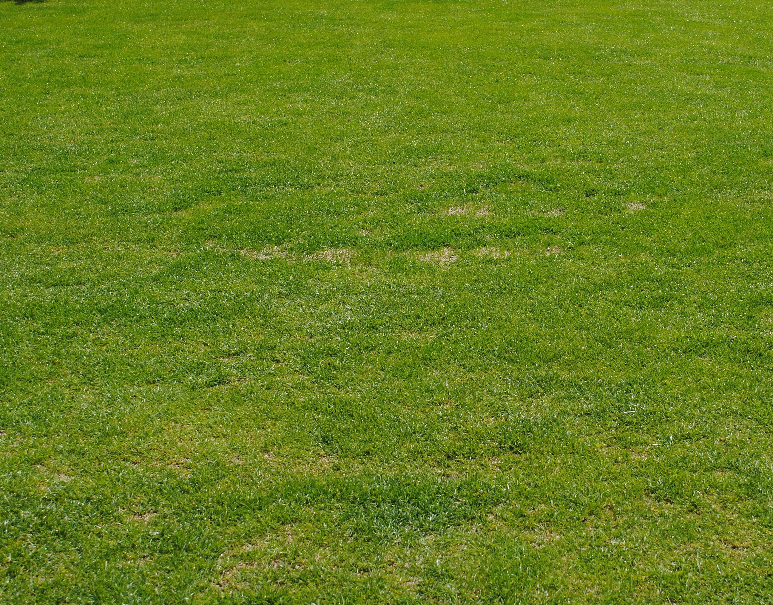 草刈り 写真