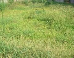 草刈り 枕崎