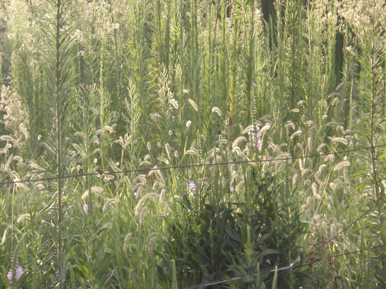 空き地 草