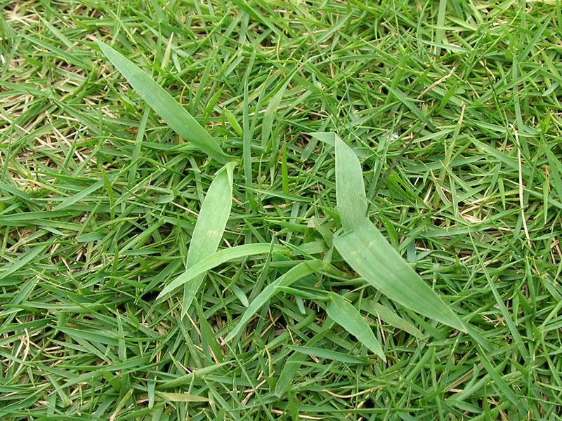 鹿児島 雑草対策