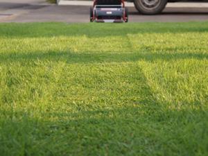 芝刈り 仕上がり プロ