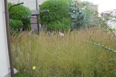 草刈り 南薩摩