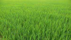 草刈り 志布志