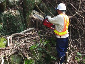 シルバーに断られた伐採作業は弊社にご依頼を!