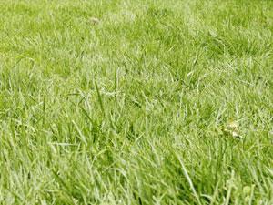 バイオマス発電所周辺の草刈りの費用