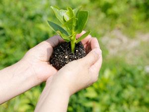 ガーデニングの雑草処理の流れ