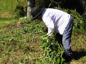 草刈り時の服装